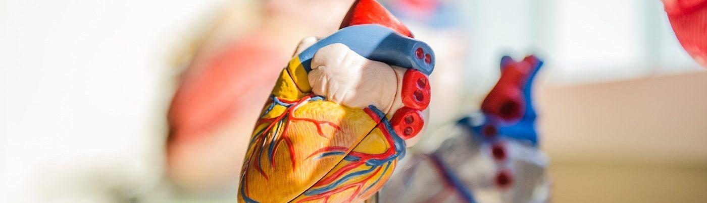 Enfermedades Cardiovasculares - Escuela de Medicina - Facultad de ...