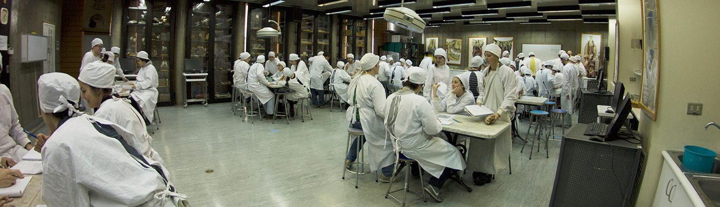 Anatomía - Escuela de Medicina - Facultad de Medicina
