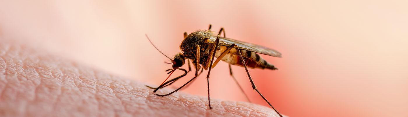Uso de Aceite de Neen contra la Malaria